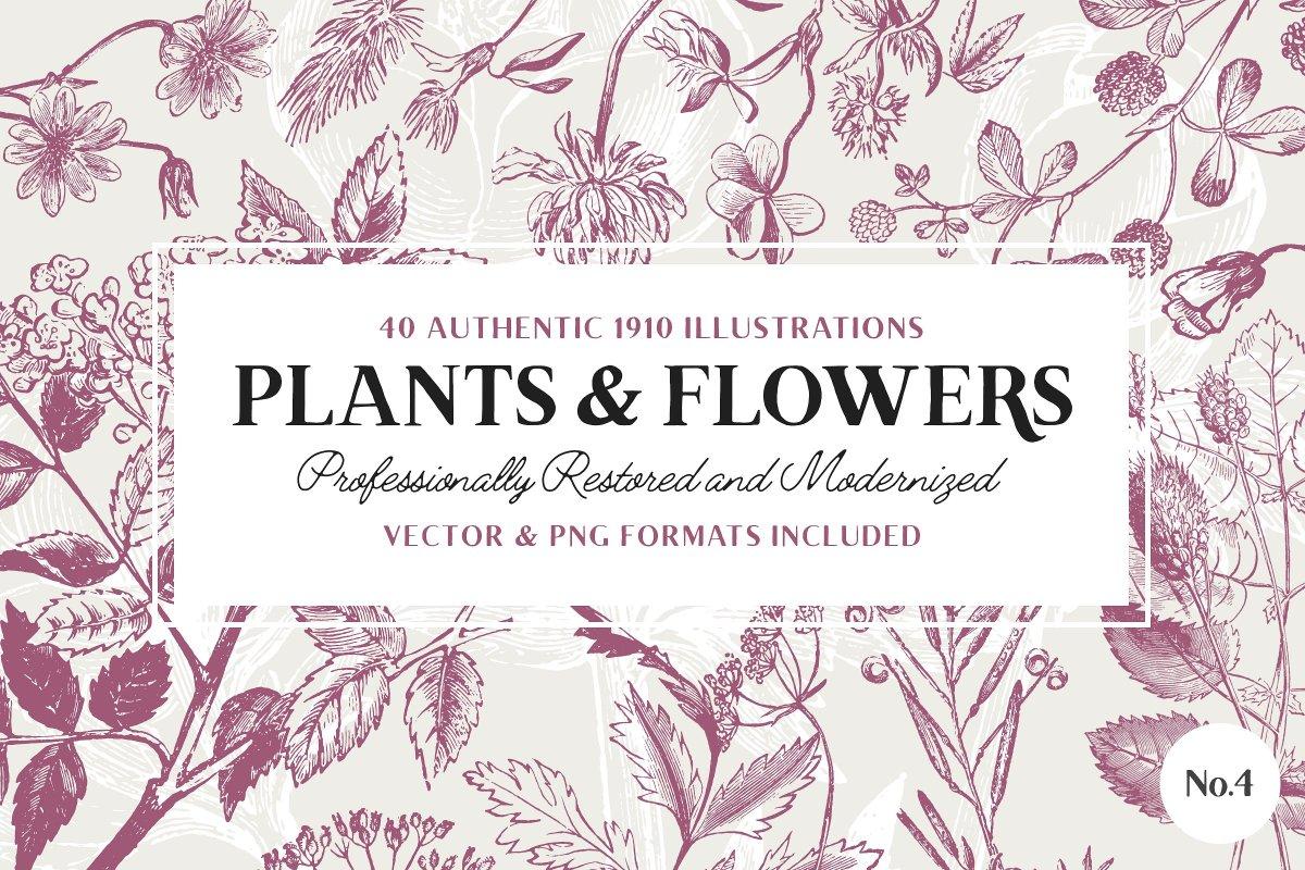 40 Vintage Flower & Plant Illustrations by Vector Hut